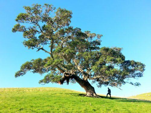 Gilly Stewart Mann unter großem Baum